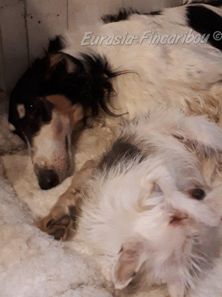 Le papa de Zoya avec notre vieille Chihuahua croisée qui est décédée en 2020