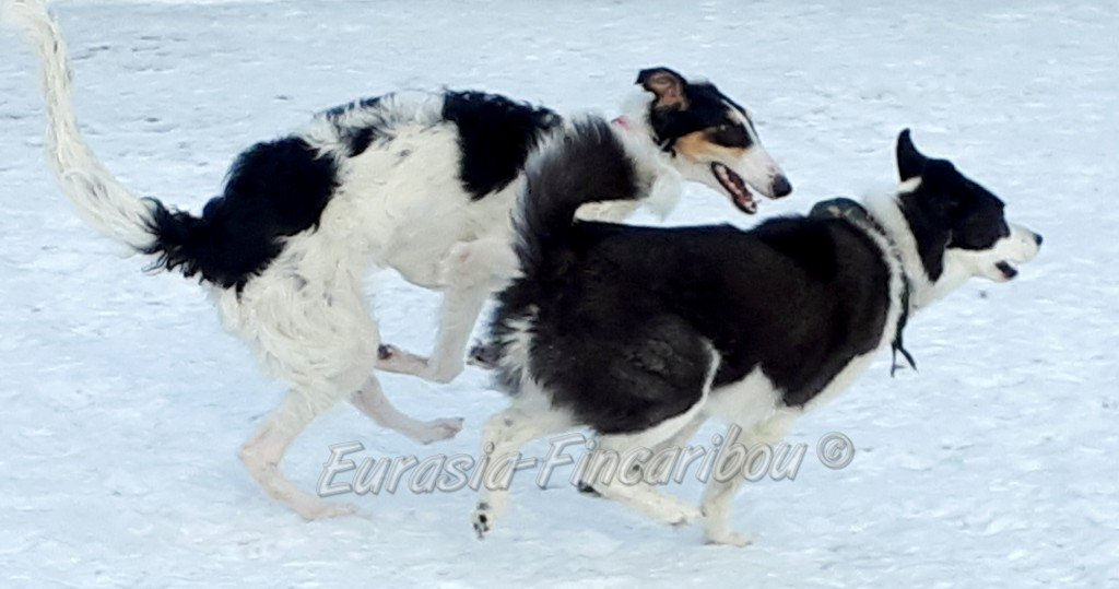 Zoya qui fait la course au parc canin