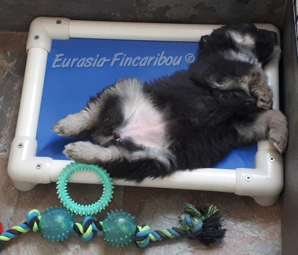 eurasia_fincaribou_finnois_laponie_10